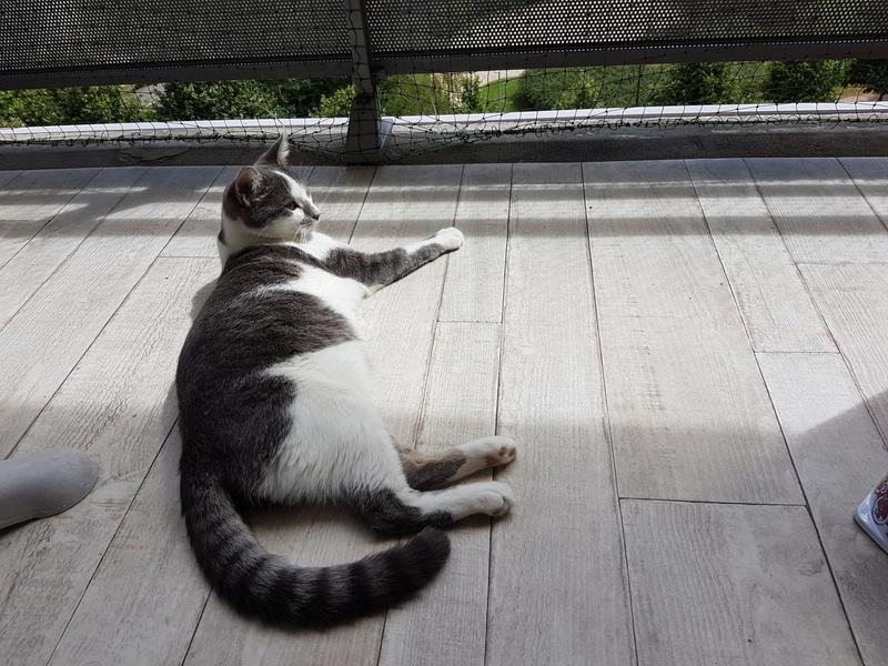 VOYOU, chaton mâle, né en Août/septembre 2016 (Pascani) - en FA chez Abysse (dpt92) - ADOPTE PAR VALERIE (92) 20170799