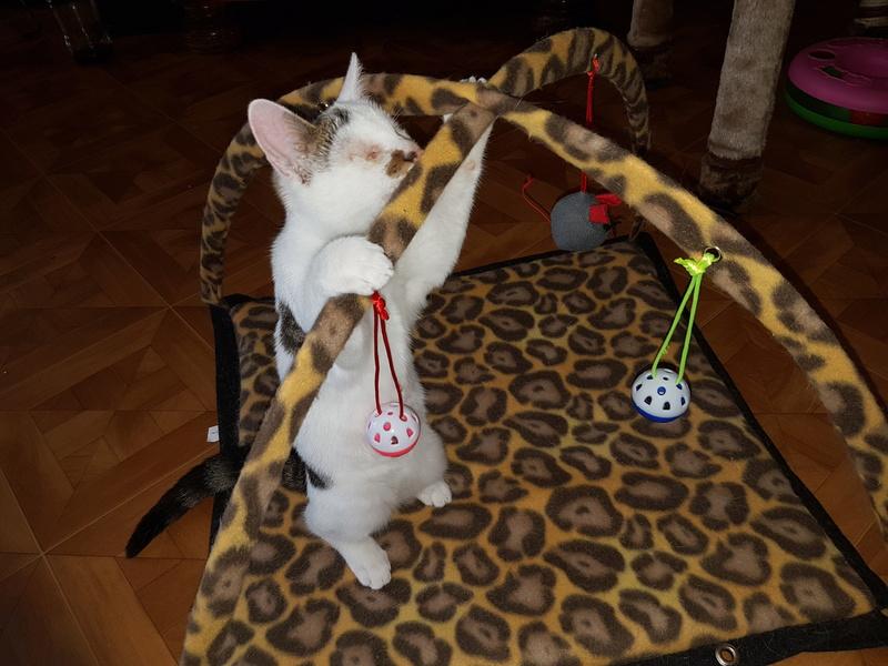 Mr SPOCK - chaton mâle, aveugle, né environ en mars 2017 - chez Lucian - Réservé FA par Abysse - Adopté par Valérie (92) 20170814