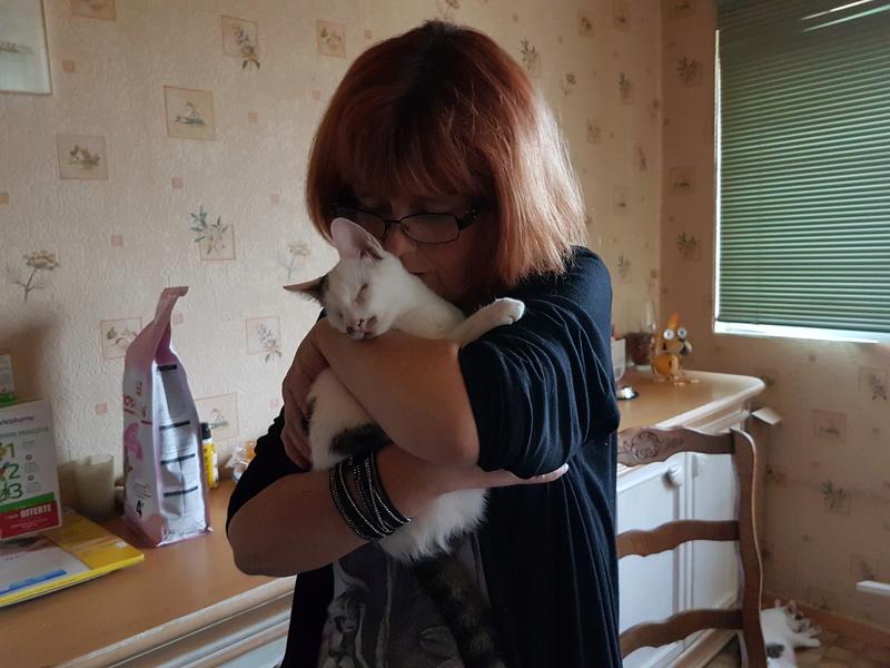 Mr SPOCK - chaton mâle, aveugle, né environ en mars 2017 - chez Lucian - Réservé FA par Abysse - Adopté par Valérie (92) 20170820