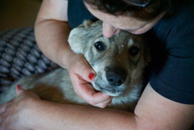MEZZO- chiot male typé chien loup tchéchoslovaque- né environ en mars 2017 - REMEMBER ME LAND  - adopté par Katy (55) Alto11