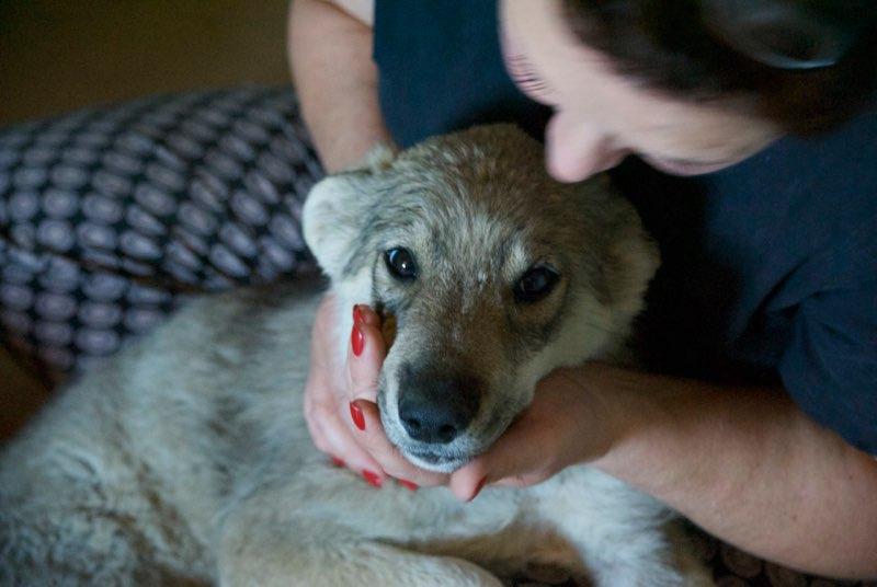 MEZZO- chiot male typé chien loup tchéchoslovaque- né environ en mars 2017 - REMEMBER ME LAND  - adopté par Katy (55) Alto111