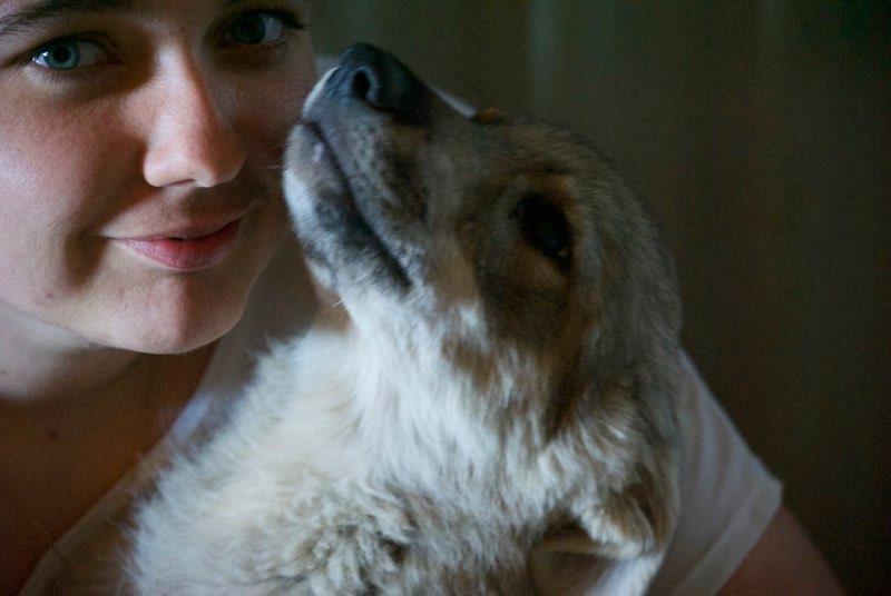 MEZZO- chiot male typé chien loup tchéchoslovaque- né environ en mars 2017 - REMEMBER ME LAND  - adopté par Katy (55) Alto311