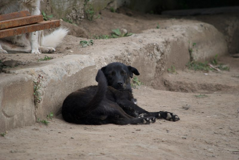 CONGO - mâle croisé de taille moyenne, sociable, né en 2015/2016 - (Topile) - adopté par Alexia (74) Congo110
