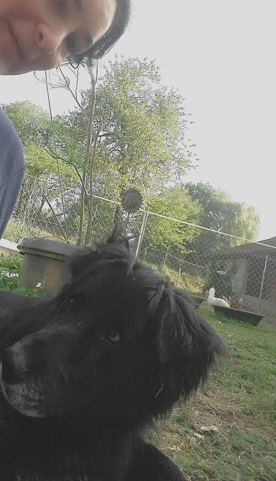 EBENE - x labrador/ noir env 11 ans  - Asso Remember Me - Roumanie  Ebene210