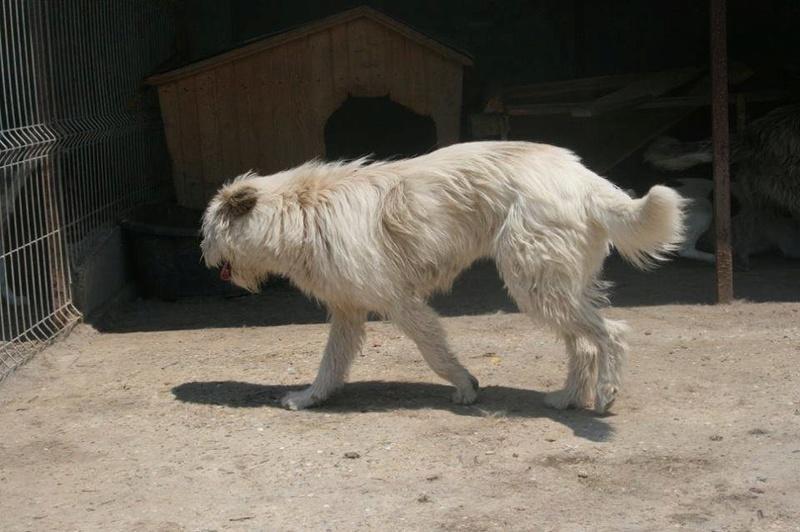 GABIN, mâle, né environ en 2008, taille moyenne - Chez Anda et Alina - Adopté par CHRISTINE (Belgique) DCD Gabin410