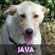 Association Remember Me France : sauver et adopter un chien roumain Java10