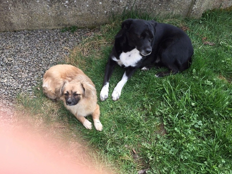 KAWAI, chien mâle, né en 2013, croisé, trouvé blessé (Pascani)- adopté par Veronica (Belgique) - Page 7 Kiki__11