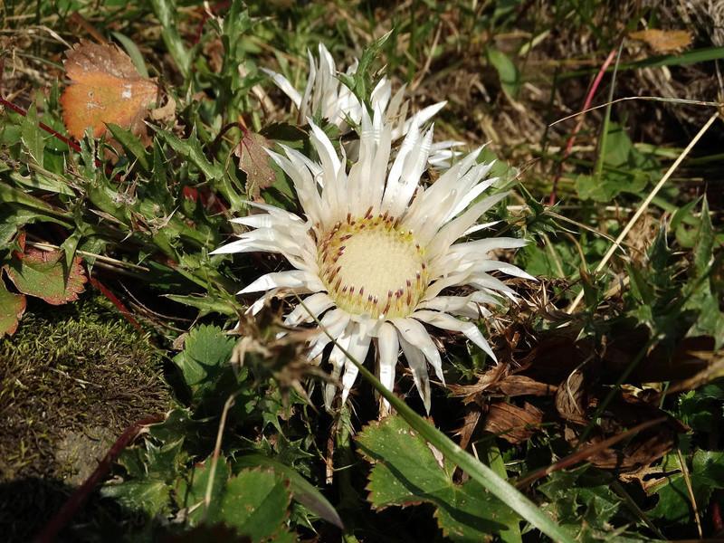Randonnée sous le Cervin à Breuil-Cervinia Dsc01312