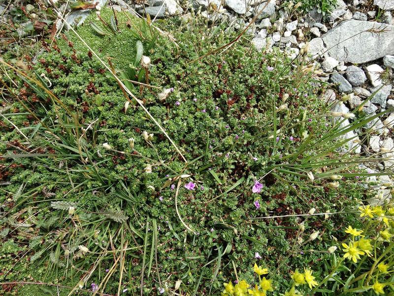 Randonnée sous le Cervin à Breuil-Cervinia Dsc01513