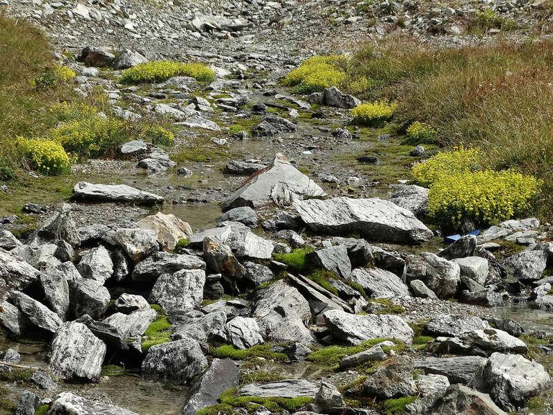 Randonnée sous le Cervin à Breuil-Cervinia Dsc01515