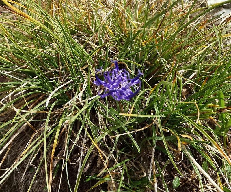 Randonnée sous le Cervin à Breuil-Cervinia Dsc01517