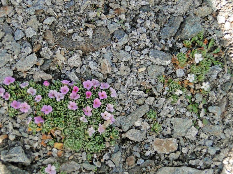 Randonnée sous le Cervin à Breuil-Cervinia Dsc05710