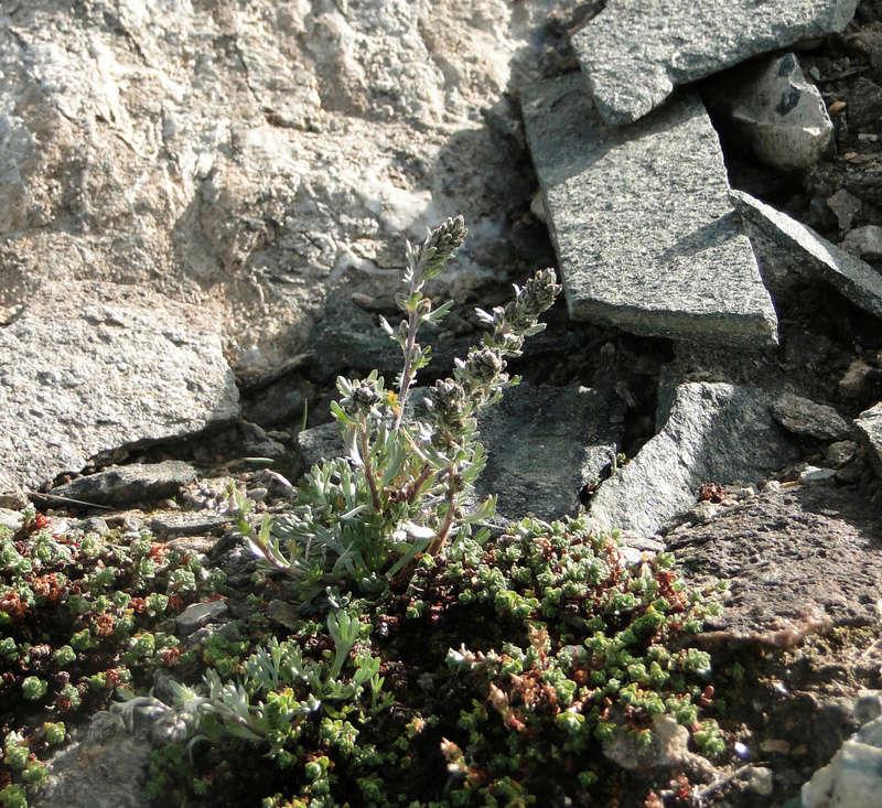 Randonnée sous le Cervin à Breuil-Cervinia Dsc05716