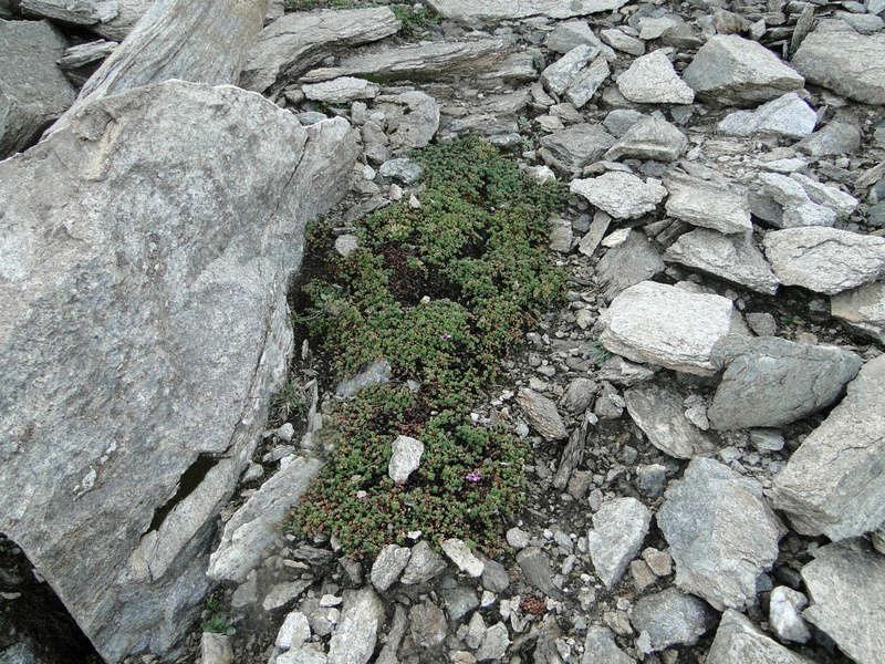 Randonnée sous le Cervin à Breuil-Cervinia Dsc05717