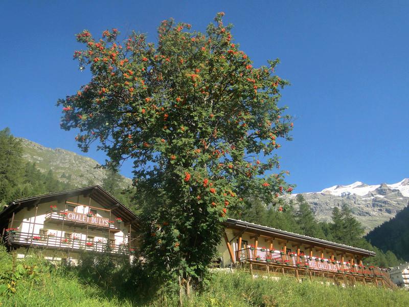 Sorbus aria - alisier blanc Sorbie10