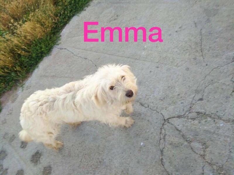 EMMA, F-X, 20KG(ORASTIE/RUE) - Adoptée via le Refuge GALIA 20891210