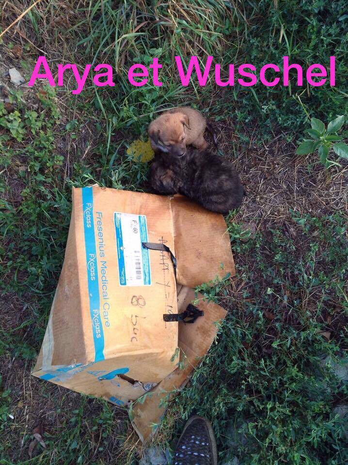 WUSCHEL, F-X, née 07/2017 (RUE ORASTIE ) - Prise en charge Refuge de Jouvence 20891612