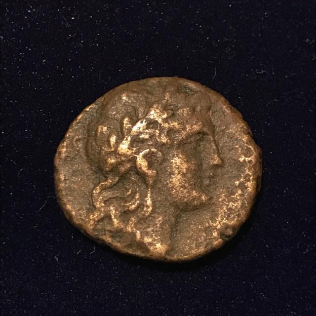 Identification grecque #2 Img_1811