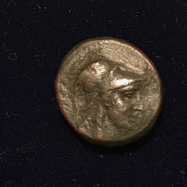 Identification grecque #3 Img_1813