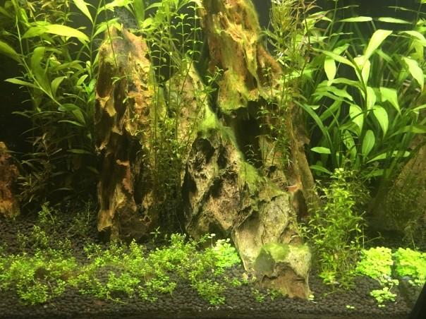 Lancement aquarium 60L 2017-012