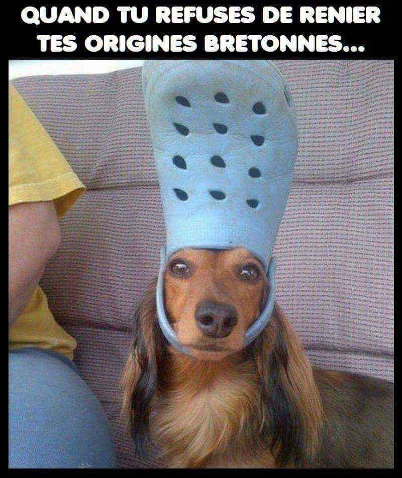 Humour en images - Page 12 Fb_img15