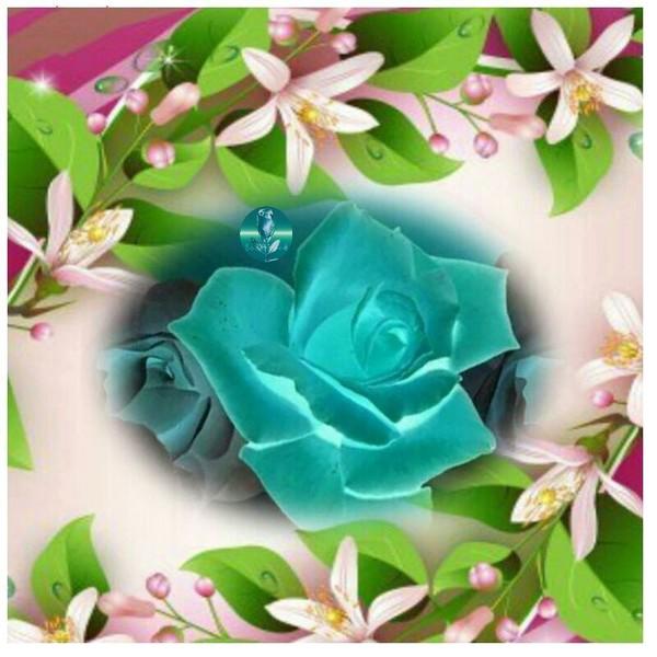 Une rose à offrir n°2 - Page 17 1a143310