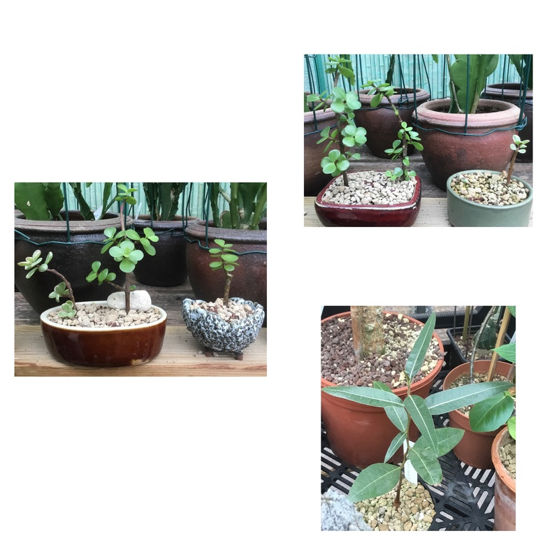 Des nouvelles des semis de Tikati  Img_3510