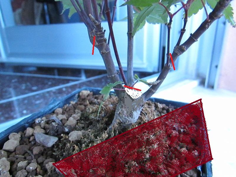 Acero Rosso Img_3711