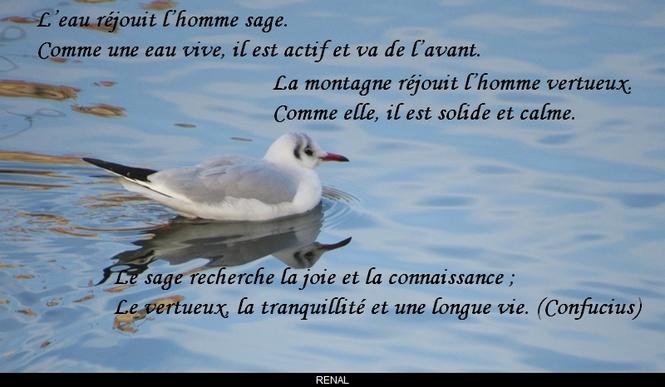 citation du jour / celebre / et images - Page 2 L_eau10