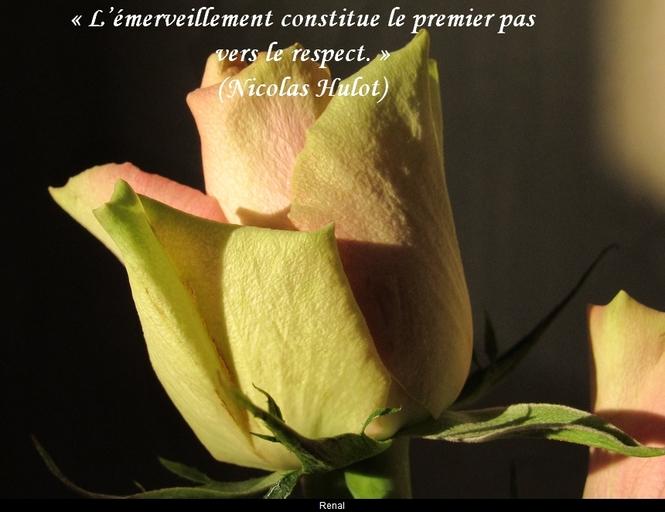 citation du jour / celebre / et images - Page 4 L_ymer10