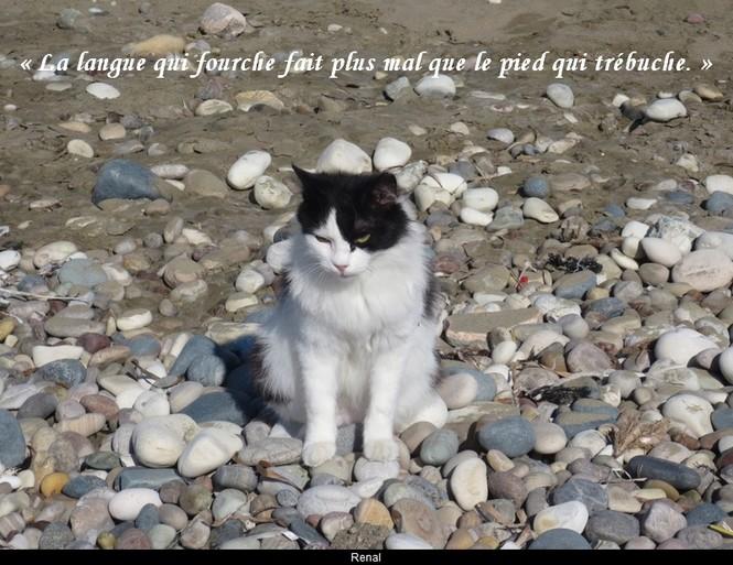 citation du jour / celebre / et images - Page 5 La_lan10