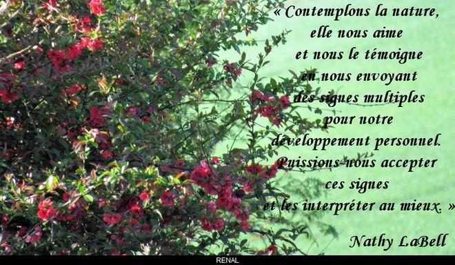 citation du jour / celebre / et images - Page 4 La_nat10
