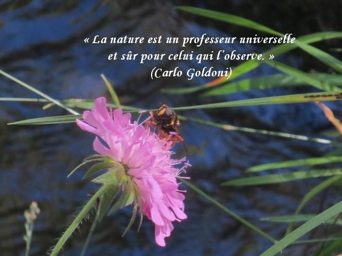 citation du jour/celebres et images de colette - Page 9 La_nat12