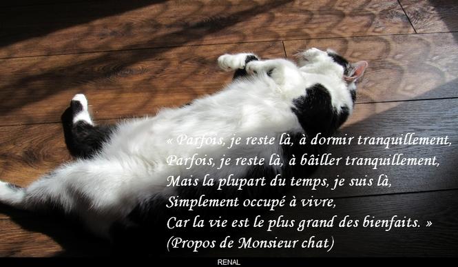 citation du jour/celebres et images de colette - Page 8 La_vie11