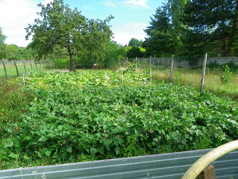 Jardin de Mr Canelle Imgp0018