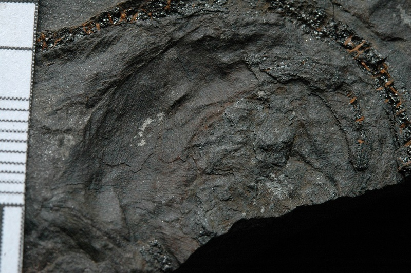 Fossiles de Graissessac Gra_5213