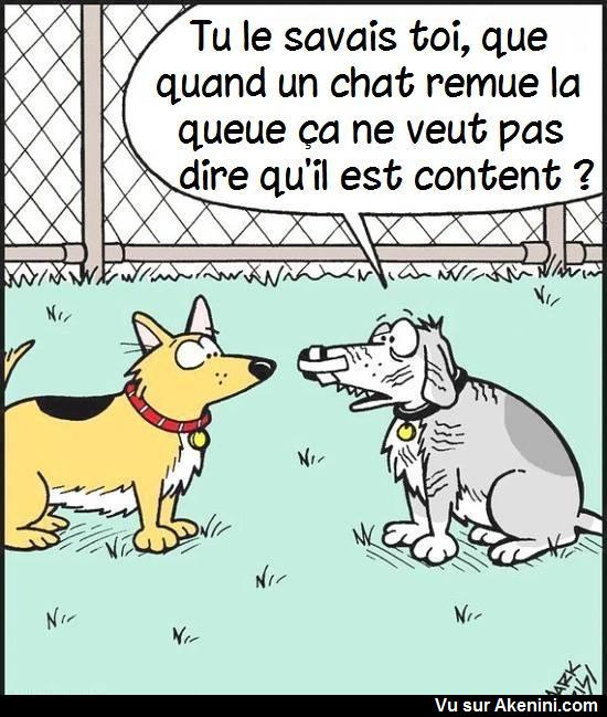 HUMOUR - Page 40 17310