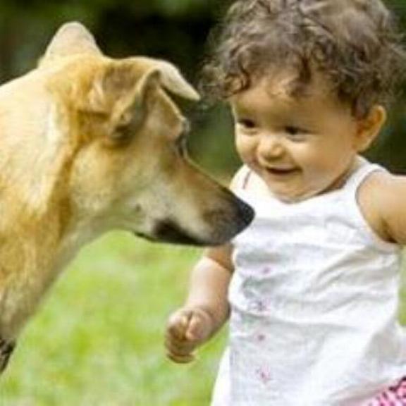 Chiens baby sitter Nadou138