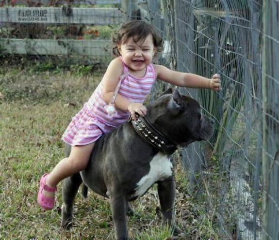 Chiens baby sitter Nadou158