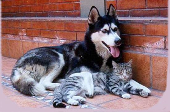 Les chats - nos petits compagnons Nadou_56