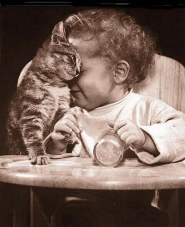 Les chats - nos petits compagnons Nadou_68