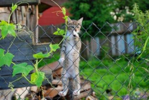 Les chats - nos petits compagnons Nadou_90
