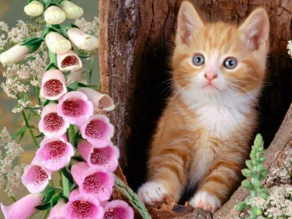 Les chats - nos petits compagnons X_0010