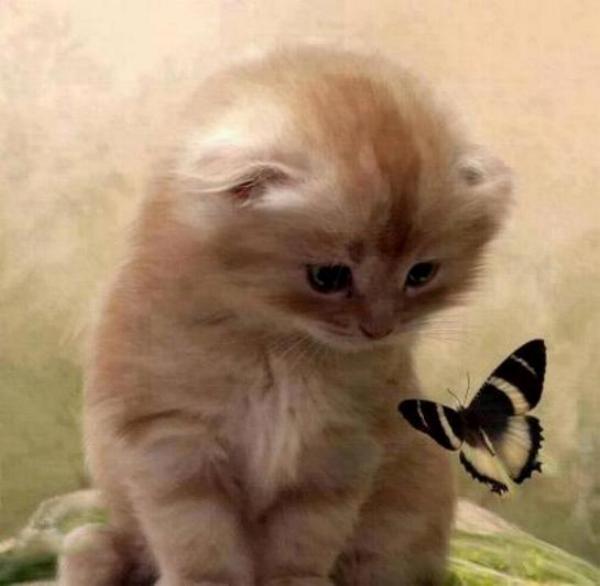 Les chats - nos petits compagnons X_0210