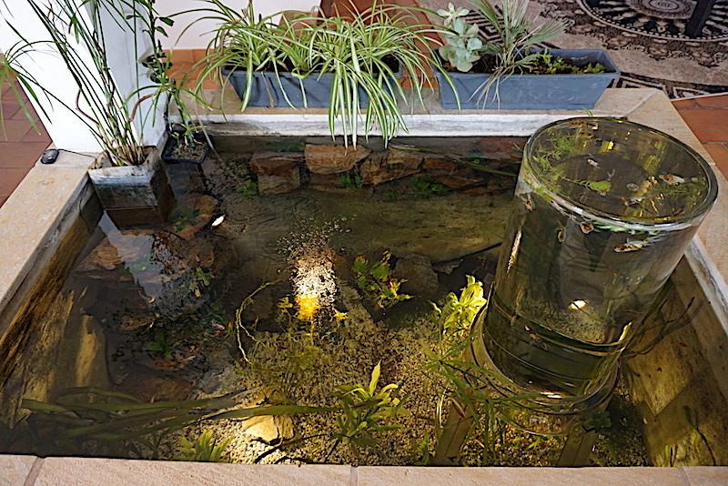 Bassin intérieur avec son observatoire  - Page 8 Dsc01714