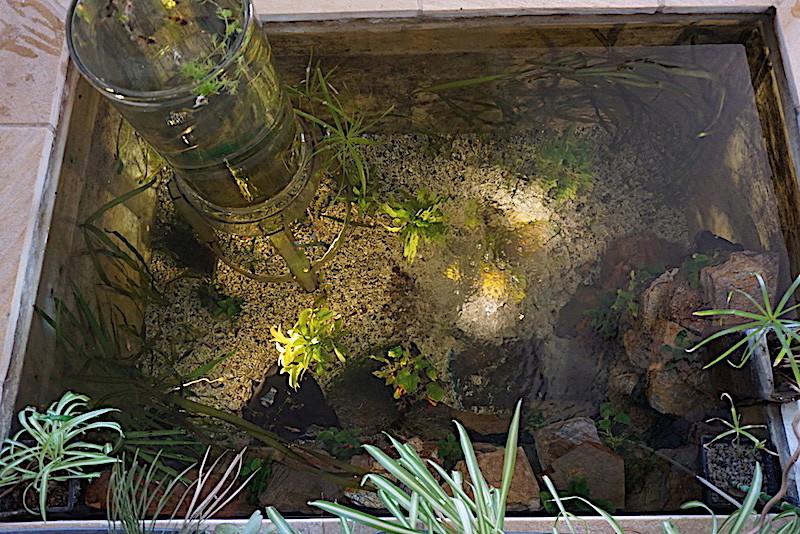 Bassin intérieur avec son observatoire  - Page 8 Dsc01715