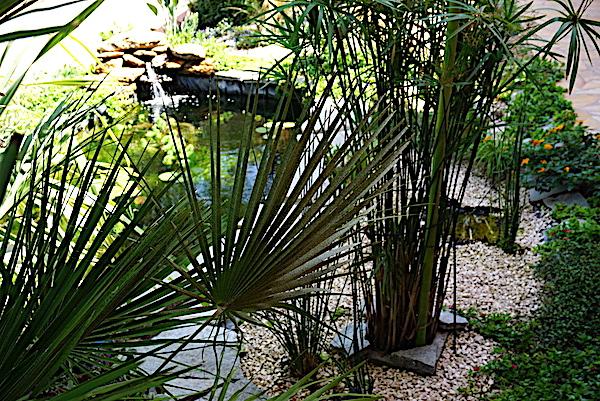 Bassin extérieur avec voiles de chine - Page 10 Dsc01717