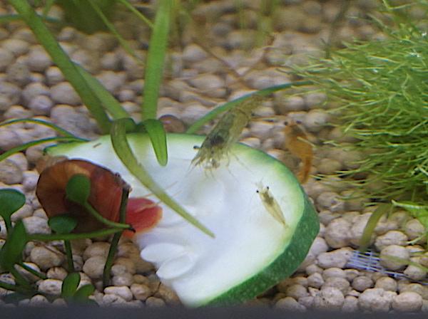 6 BACS ESCALIER dont 4 avec crevettes et 2 avec plantes - Page 4 Dsc02714