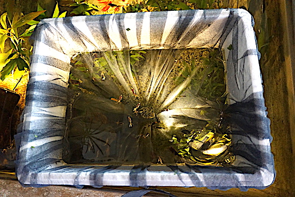 Bassin intérieur avec son observatoire  - Page 8 Dsc04517