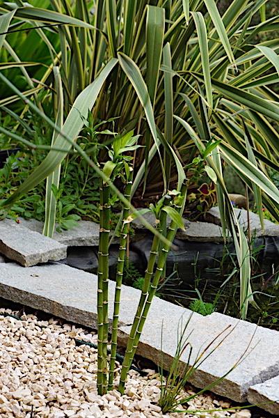 Bassin extérieur avec voiles de chine - Page 11 Dsc06420